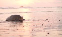 Sunset Shack Hotel - Turtle